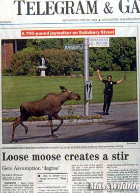 dfw_moose_news.jpg